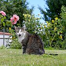 Winking Tabby Cat by Maria Dryfhout