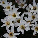 flowers by Sheila McCrea