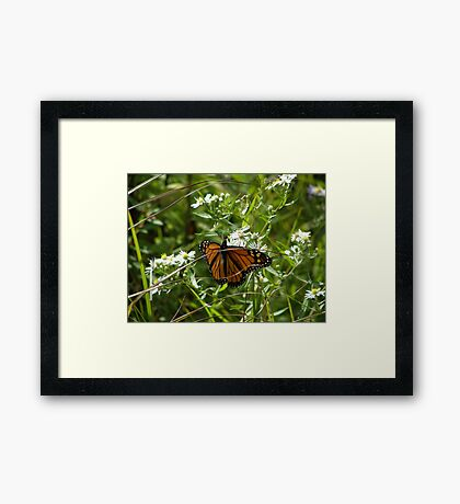 Dressed to the Nines Framed Print