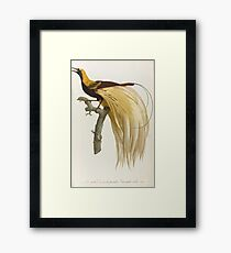 Levaillant, François. NATURAL HISTORY OF BIRDS OF PARADISE AND Rollers, FOLLOWED BY THOSE TOUCANS AND BARBUS. Framed Print