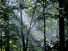 Shining Light by NatureGreeting Cards ©ccwri
