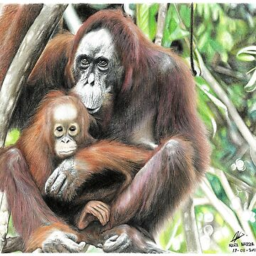 Orangutan mother and child by Nasir-Nadzir