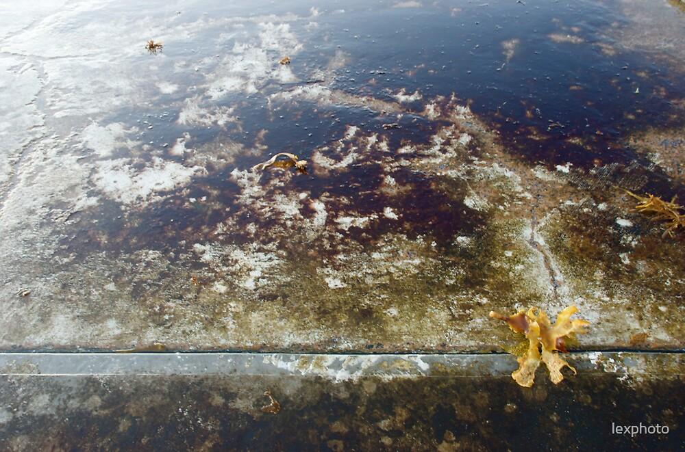 seaweed by lexphoto
