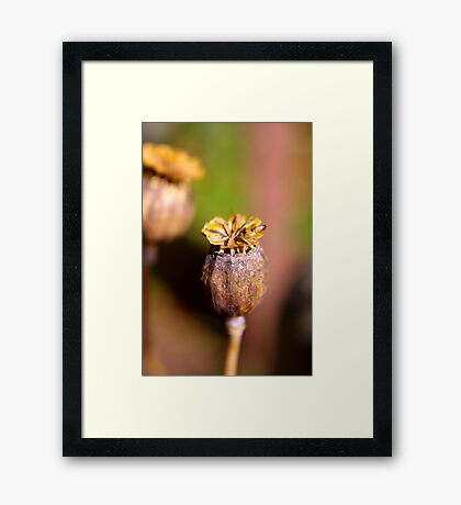 Seed Heads Framed Print