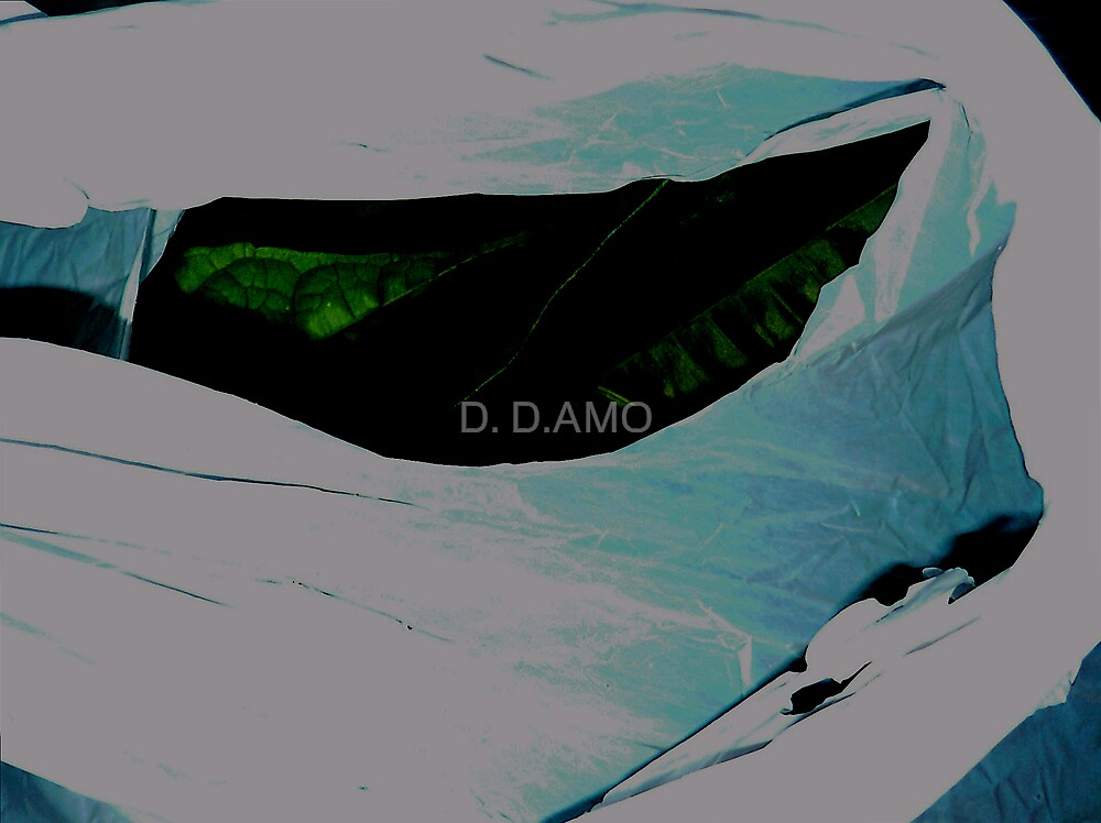 Abica in transport by D. D.AMO