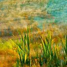 Artscape    Reeds by Imi Koetz