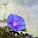 Mosaic by Jonicool