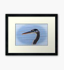 Great Blue Heron Portrait Framed Print
