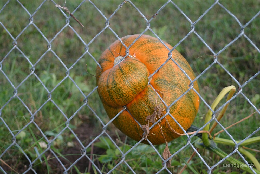 One little pumpkin stuck in a fence by wendylea75