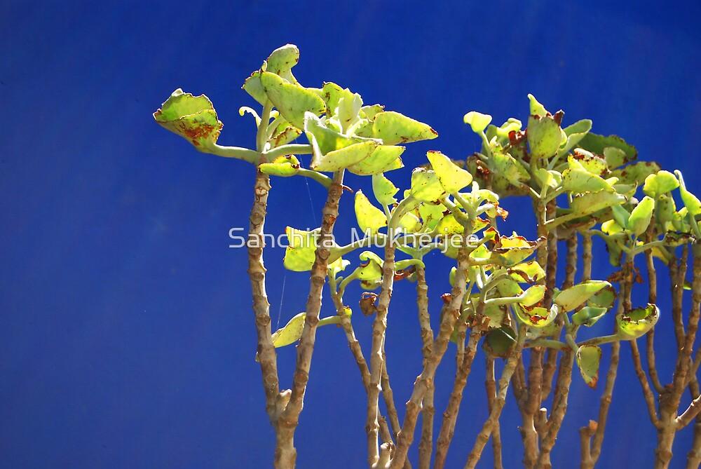against a blue wall... by Sanchita  Mukherjee