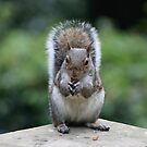 Squirrel's Lunch time! by Paul McGuire