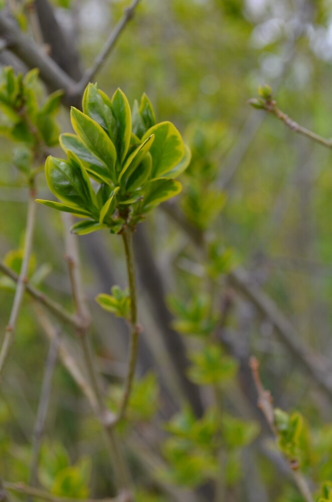 simple twig print by chipsandsalsa