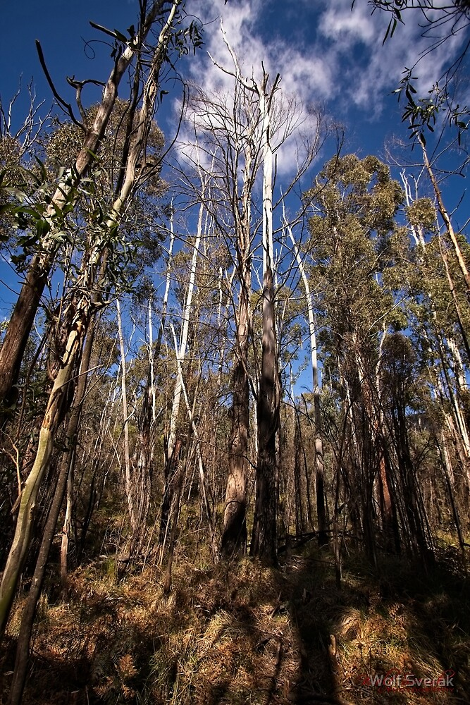 Hanging Rock @ Tidbinbilla/ACT/Australia (1) by Wolf Sverak