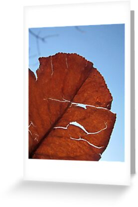 sunlight through a leaf by chipsandsalsa