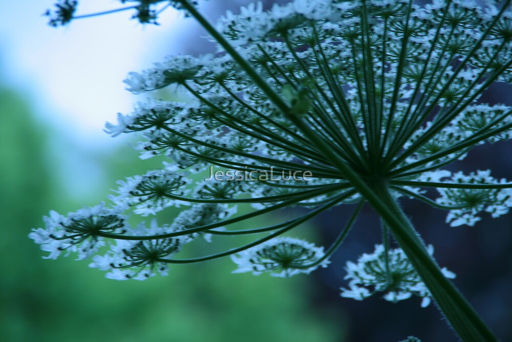 Flower in the breeze 2  by JessicaLuce