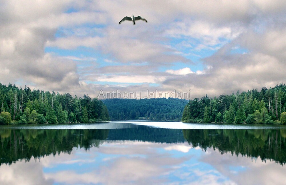 Free as a bird by Anthony Jalandoni