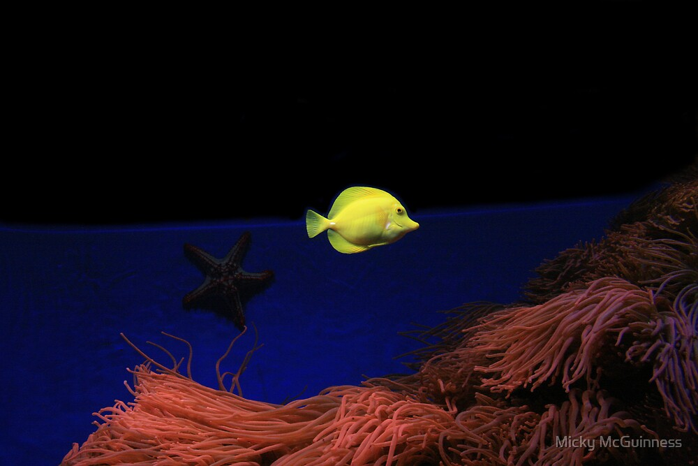 Yellow Fish by Micky McGuinness