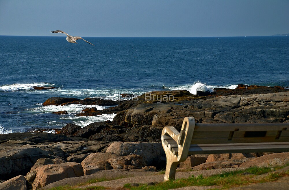 The Sigfusson Seagull by Lois  Bryan