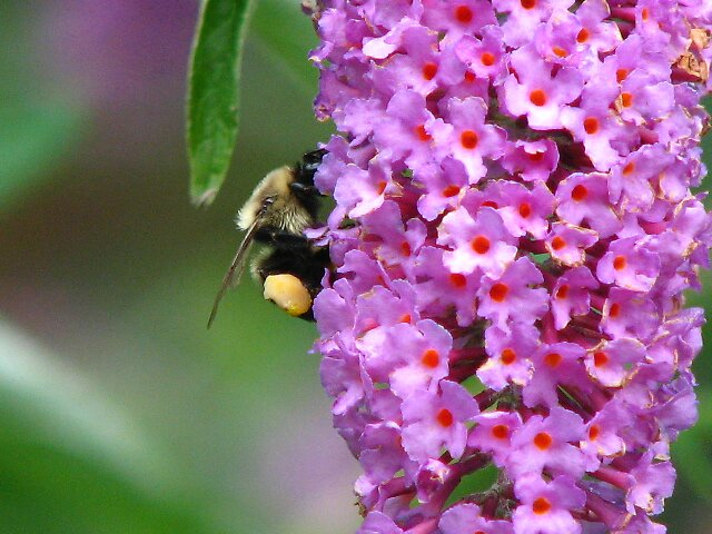 Bee Number 2 by kassykore