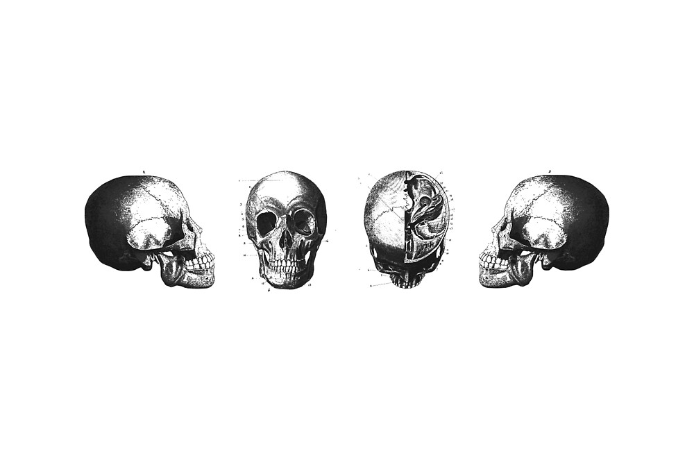 Four Skulls - Vintage Engraving - Antique Black and White by MadZakkaGraphic