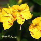 Get Well Soon by Virginia N. Fred