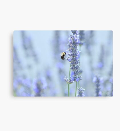 to be a bee in summertime is for the bee quite sublime... Canvas Print