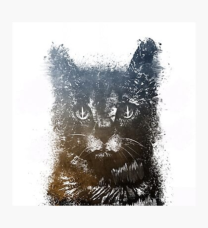 Gray cat Lucky Photographic Print