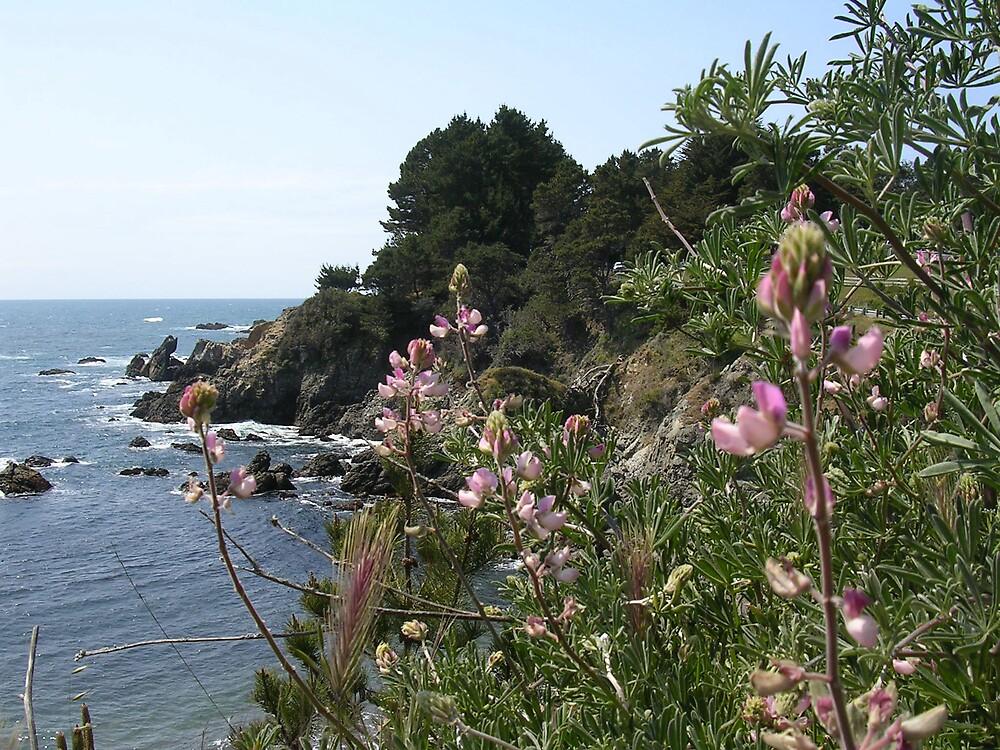 California Coast  by tunatya