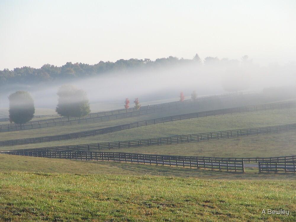 Foggy Days by A Bewley