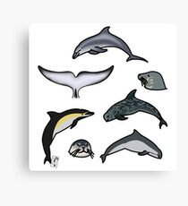 Marine mammals pattern Canvas Print