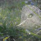 Spiderwebs in Sun Ray by Angelique Moorman