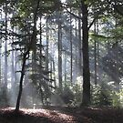 Autumn Sun Rays in Forest by Angelique Moorman