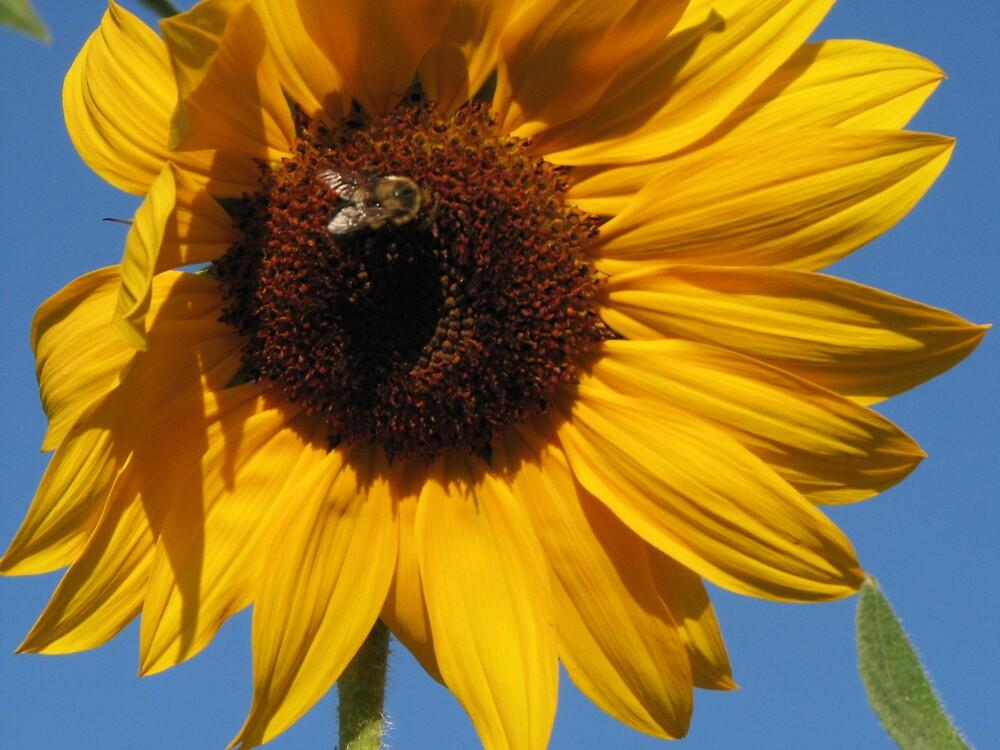 Sunny Bee by Stephanie86