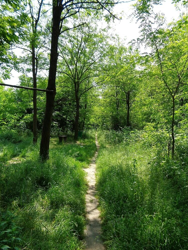 Forest path by Ana Belaj