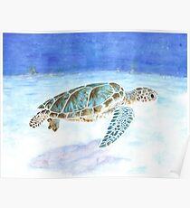 Sea turtle underwater Poster