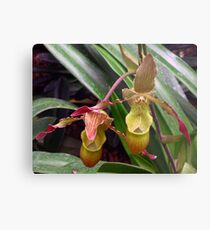 Slipper Orchid Metal Print