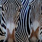 Zebra Pals by Sue  Cullumber