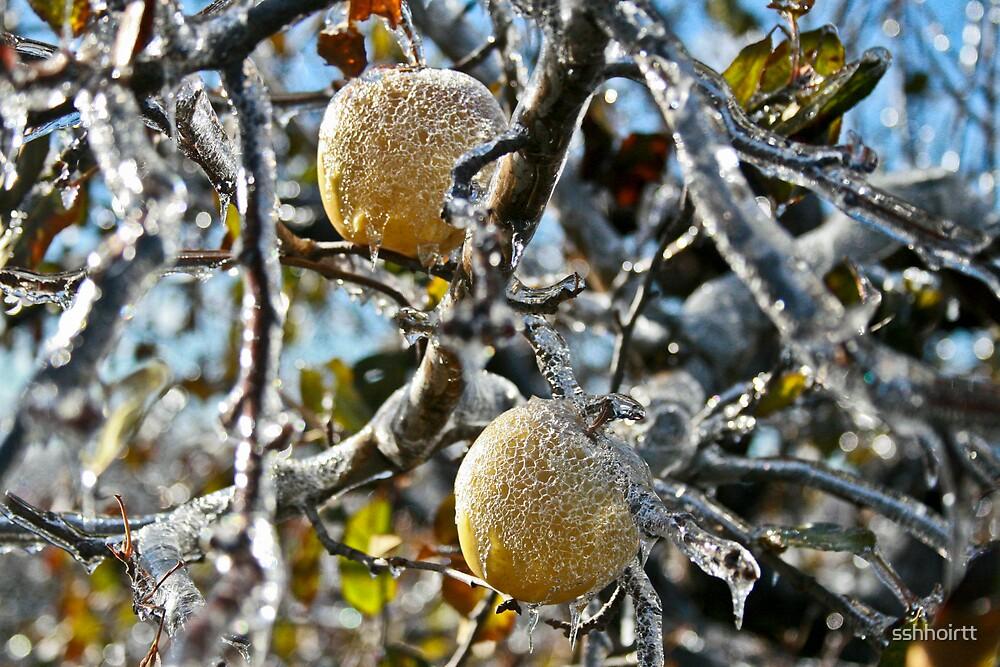 Frozen Apples by sshhoirtt