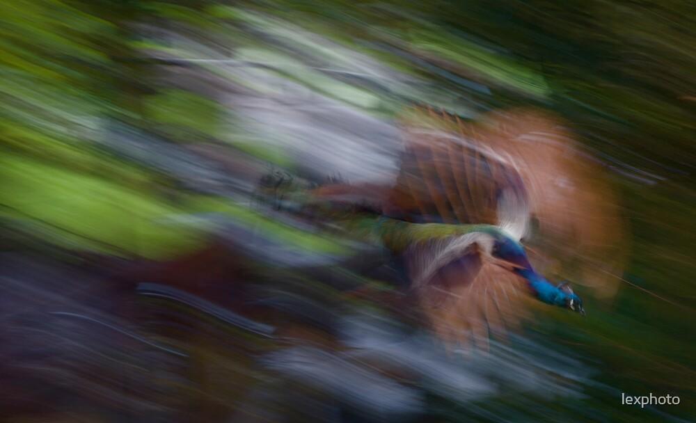 in flight by lexphoto