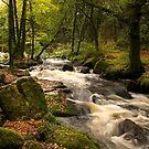 Golitha falls Cornwall by eddiej