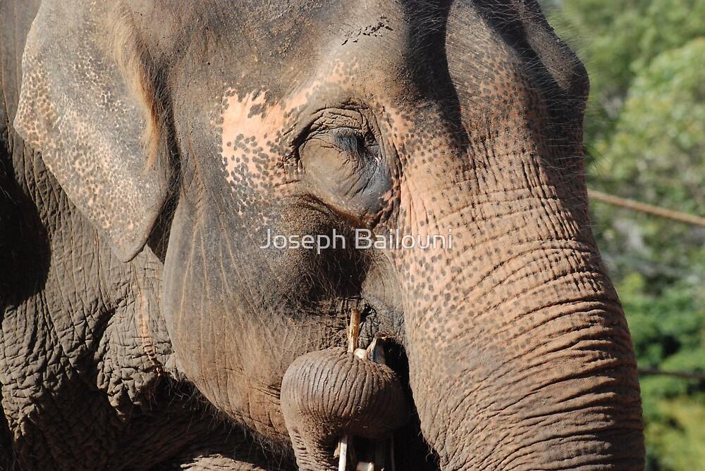 Elephant Lunching by Joseph Bailouni