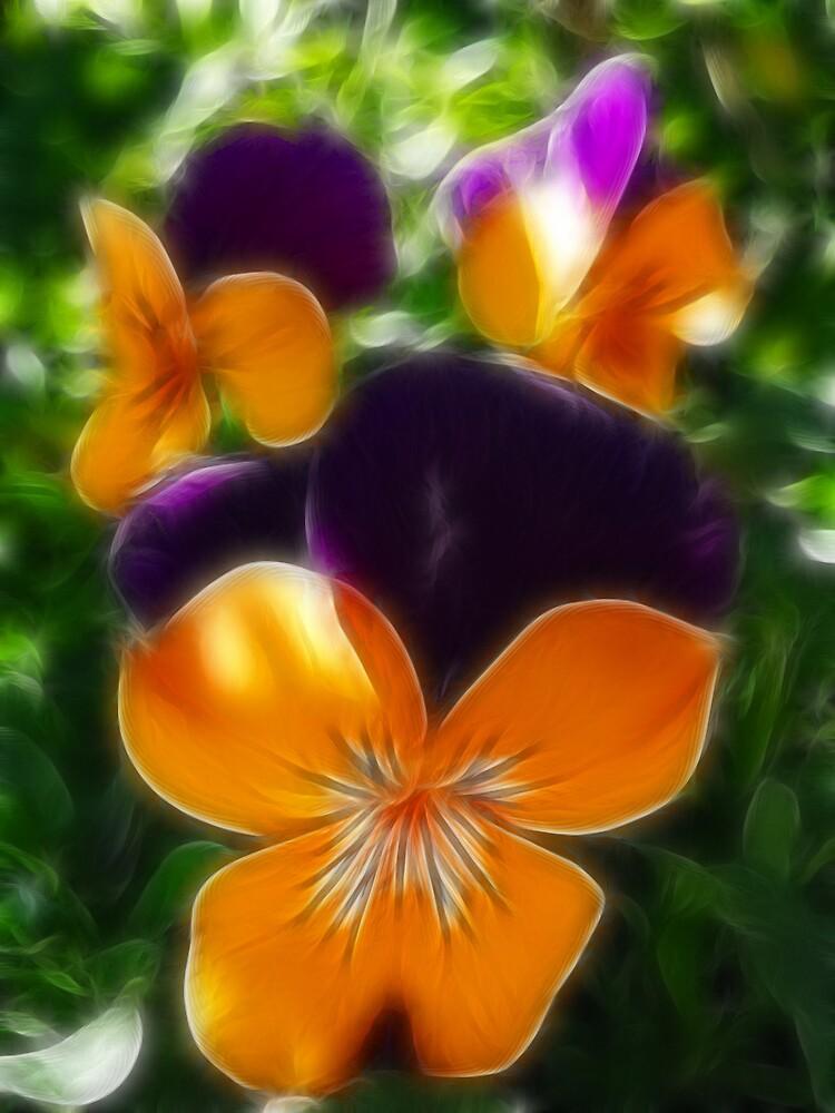 orange and purple violas by SarahTrangmar