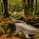 Golitha falls autumn  Cornwall by eddiej