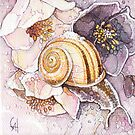 Winter Snail by Carrie Alyson