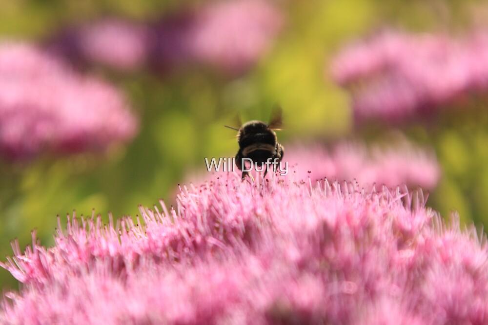 Bee Fun by Will Duffy