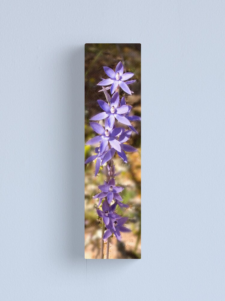 Alternate view of Thelymitra Nuda Canvas Print