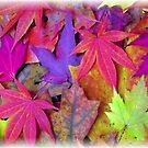 Colorful Autumn by Richard-Gary Butler