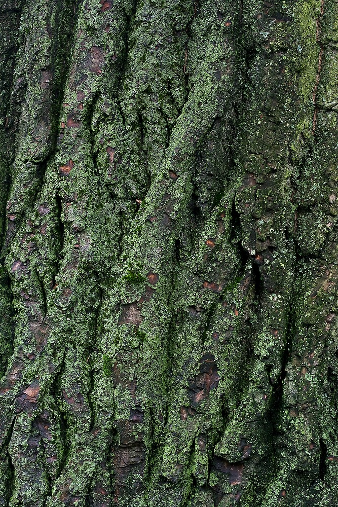 Bark abstract by mausue