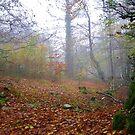 Autumn Mist by lezvee