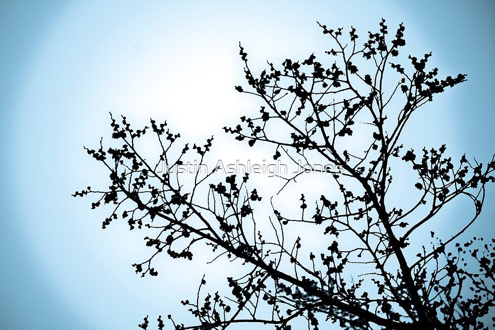 Blue Winter Tree 2 by Justin Ashleigh Jones